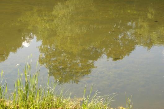 Небесна краса в Скородному, фото: Зоряна Свистович